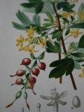 Piece Dictionnaire Universel d'Histoire Naturelle A