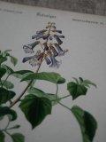 Piece Dictionnaire Universel d'Histoire Naturelle C