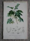 Piece Dictionnaire Universel d'Histoire Naturelle E