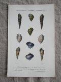 Piece Dictionnaire Universel d'Histoire Naturelle F